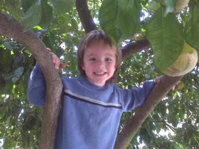 Climbing the gratefruit tree.